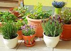 Przygotowanie donic do sadzenia roślin jednorocznych