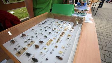 Dzień owada na ZUT