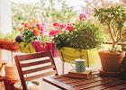 Doniczki na balkon - idealne na kwiaty, zioła i drzewka - wybraliśmy najciekawsze modele