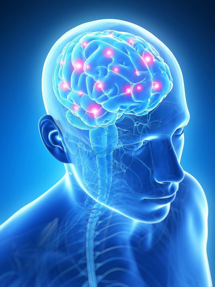Płyn mózgowo-rdzeniowy powstaje z przefiltrowanego osocza