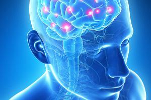 Płyn rdzeniowo-mózgowy: cechy, funkcje, badanie