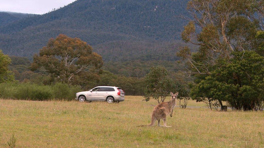Volvo | System wykrywający kangury