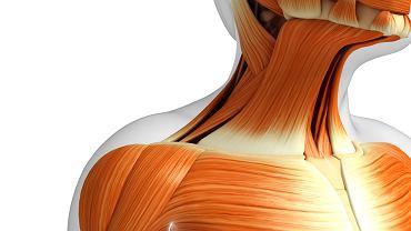 Nadmiar wielocukru zaczyna odkładać się w mięśniach oraz komórkach krwi, przede wszystkim w erytrocytach