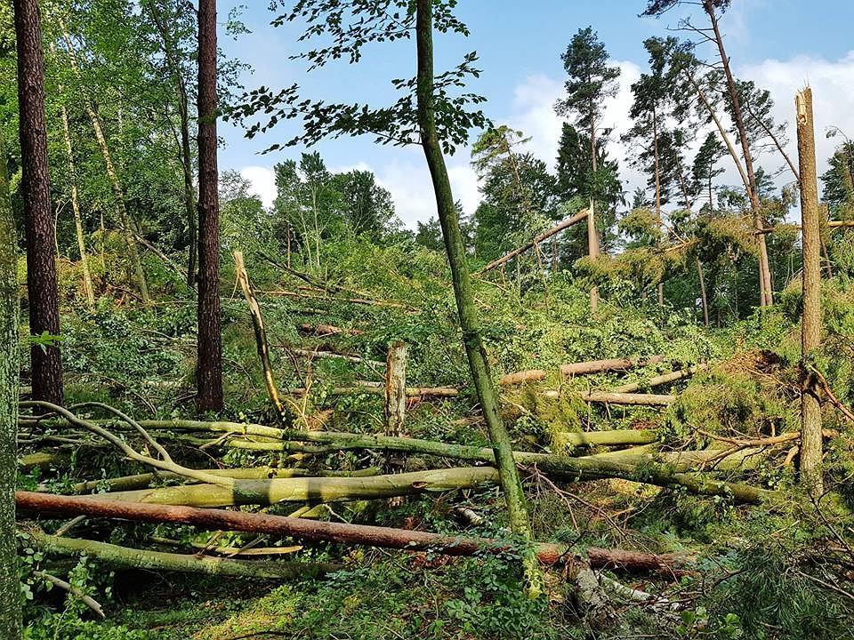 Skutki trąby powietrznej w Nadleśnictwie Stare Jabłonki, Lasy Państwowe