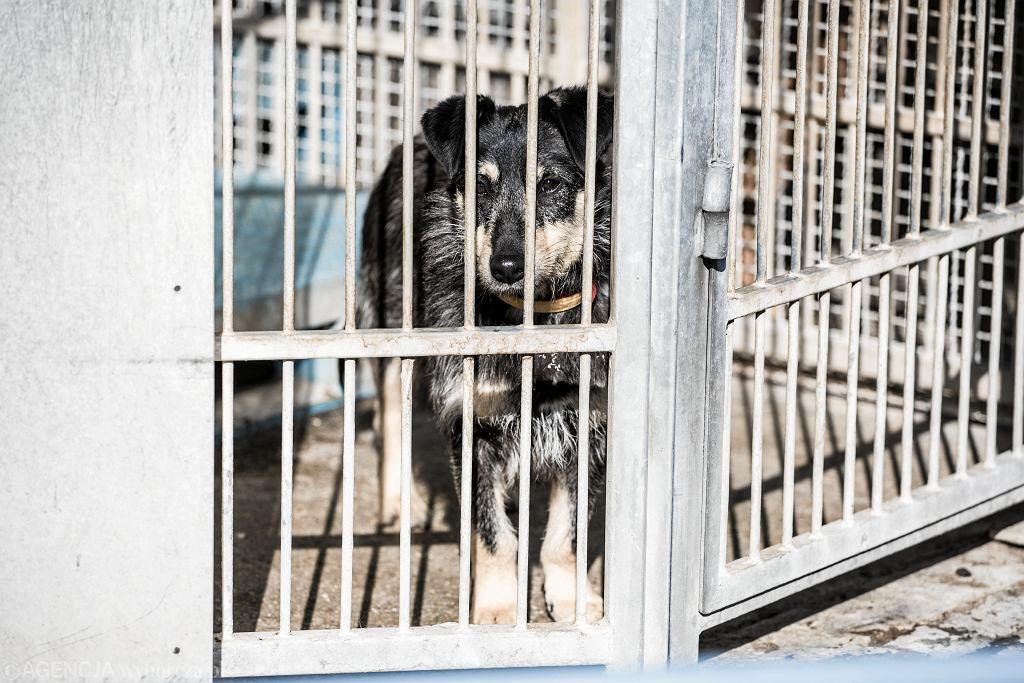 Psy w schronisku 'Na Paluchu'
