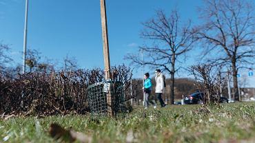 W Gdańsku zawiązała się ogrodnicza partyzantka. Pod osłoną nocy sadzi drzewa