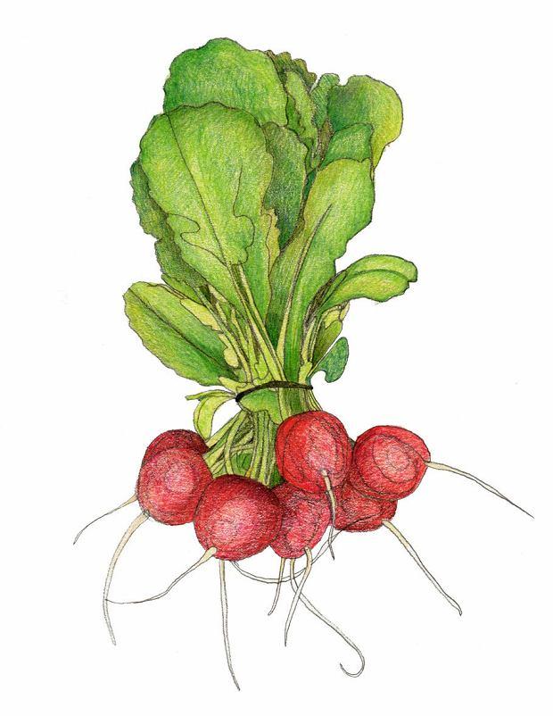Rzodkiewka, dymka, roszponka... Jakie warzywa jeść wiosną?