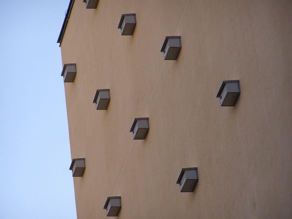 Budki lęgowe dla jerzyków na Pradze-Północ. Tak dzielnica radzi sobie z komarami