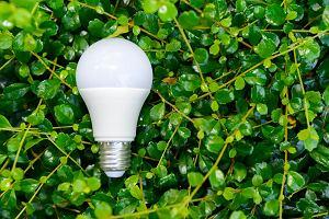 Polska żarówka prezydenta Dudy czy unijny LED? Sprawdzamy, ile kosztuje światło i czy używanie żarówek energooszczędnych ma sens