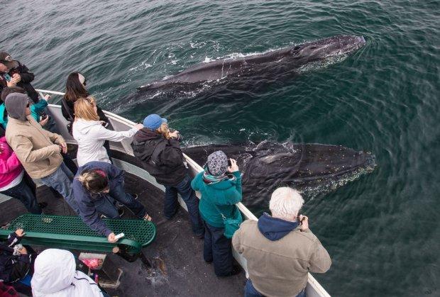 Whale watching/ Fot. Shutterstock