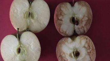 O tym, dlaczego nękanie jest złe można uczyć nawet za pomocą owoców. I to z jakimi efektami!