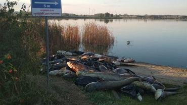 Prawie cztery tony martwych ryb znaleziono na brzegu Jeziora Koskowickiego/ Fot. Radio Wrocław