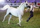 Biznes zawiódł się na polskich rumakach. Jak aukcje koni zeszły na psy