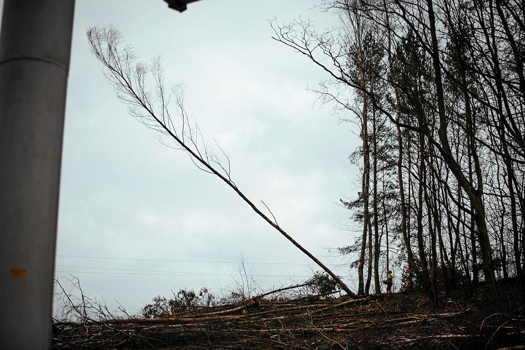 Tragedia w Niemodlinie. Podczas wycinki drzewo spadło na pięciolatka