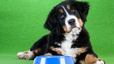 Czym nie należy karmić psa? Zdradza dietetyk