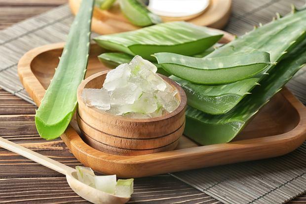 Aloes dla zdrowia i urody. Poznaj jego właściwości i zastosowanie