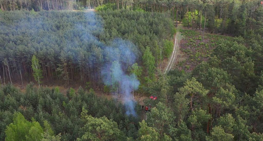 Policja namierzyła podpalacza lasów