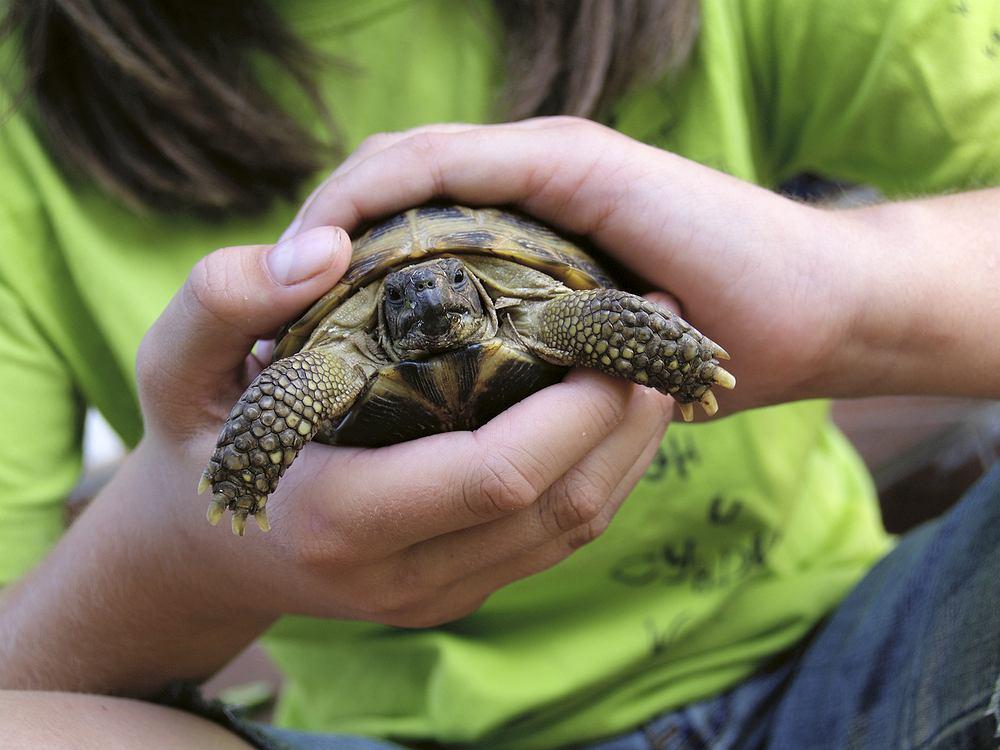 Zwierzęta domowe są wspaniałymi towarzyszami zabaw. Dodatkowo, dzieci uczą się dzięki nim poczucia odpowiedzialności.