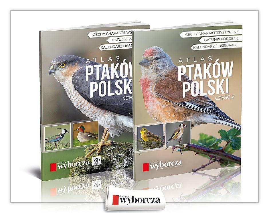 'Ptaki Polski. Atlas z Kalendarzem obserwatora' część 1 już we wtorek 11, cześć 2 w środę 12 sierpnia z 'Wyborczą'