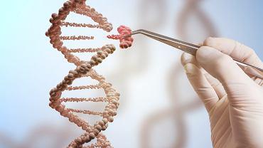 Gen decyduje o przekazaniu cech potomstwu