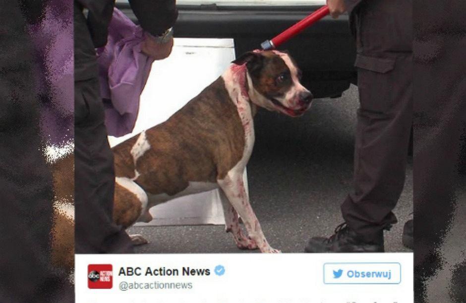Pies, który pogryzł właścicieli