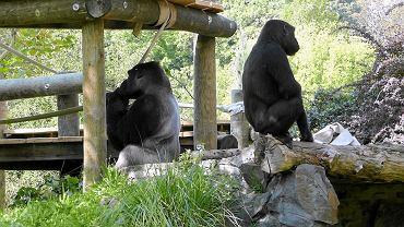 Podłącz magazyn do zoo