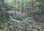 Drwale zatarasowali powalonymi drzewami szlak