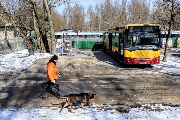 Autobus dla schroniska 'na Paluchu'