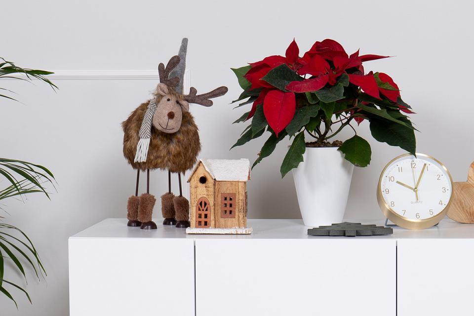Dom w świątecznej aranżacji
