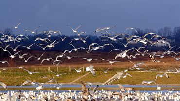 Obserwując ptaki można się na chwilę 'wylogować'