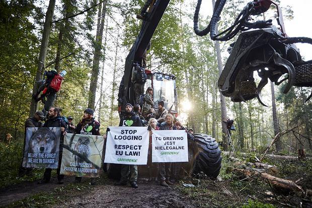 Protest Greenpeace i Obozu dla Puszczy w Puszczy Białowieskiej