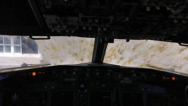 Samolot pasażerski wleciał w chmurę szarańczy