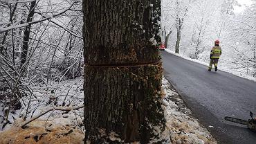 Ponacinane drzewa