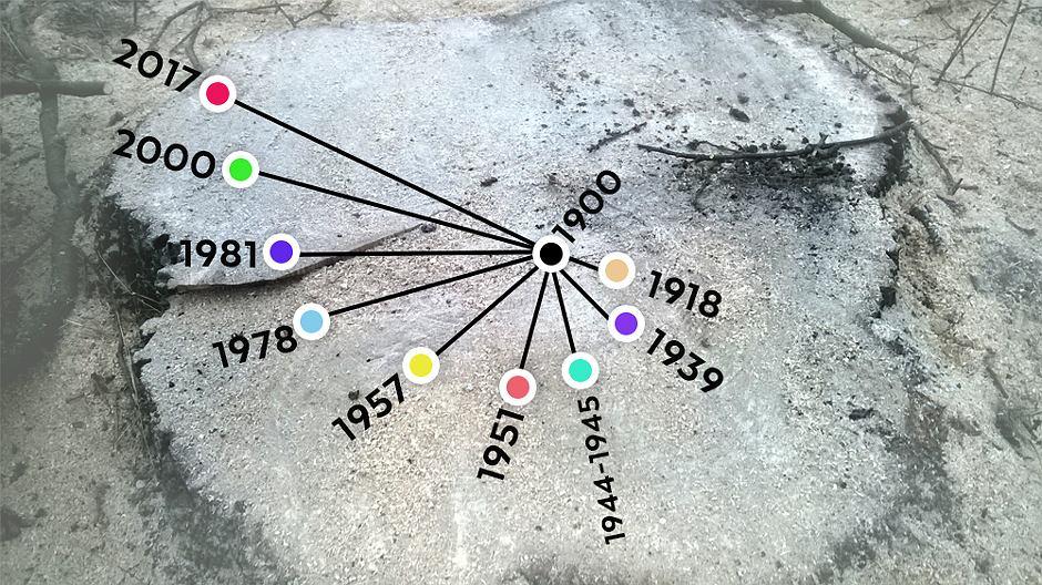 Wawerski dąb był świadkiem najważniejszych wydarzeń w historii stolicy.