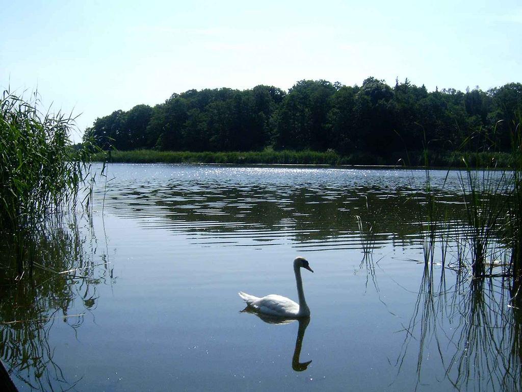 Wyspa Konwaliowa i jezioro Radomierskie, którr są częścią Szlaku Konwaliowego