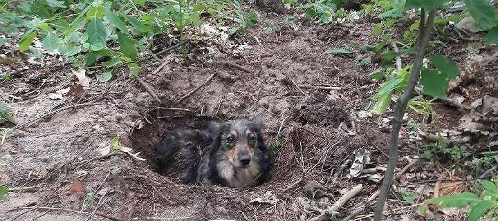 Podkarpacie. Policja zatrzymała 55-latka, który zakopał swojego psa żywcem