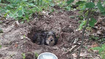 Pies zakopany żywcem w lesie na Podkarpaciu