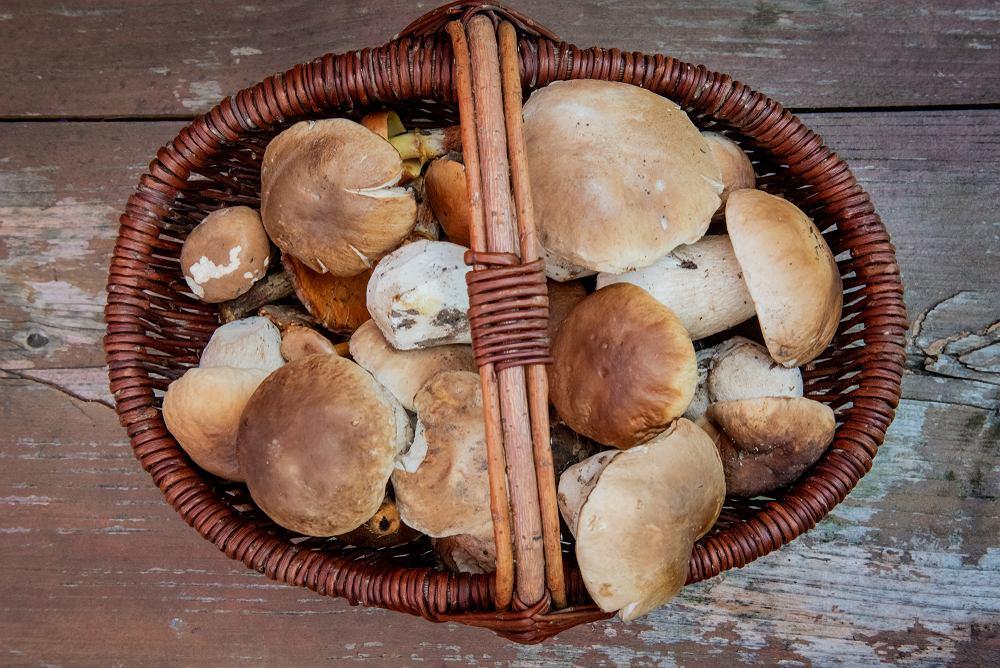 Czy są już grzyby 2019? Gdzie na grzyby? Odpowiadamy i mamy mapę grzybów