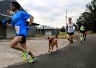 Ludivine - pies, który przebiegł półmaraton!