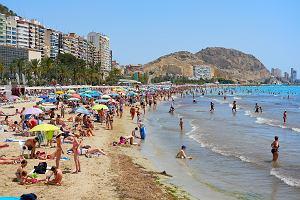 Turyści wrócili z Alicante zakażeni czikungunią. Okazało się, że przenoszą ją komary