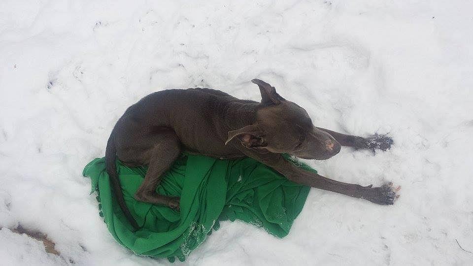 Wyniszczonego i wyziębionego psa znaleziono, 19 stycznia, w lesie w pobliżu schroniska w Celestynowie.