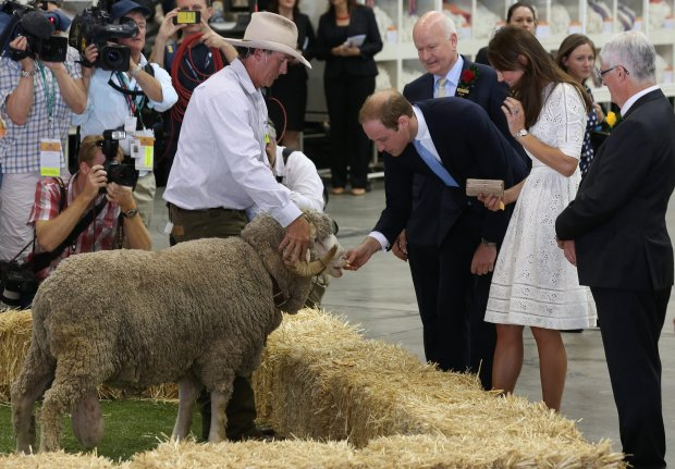 Britain's Prince William, center right, feeds a ram while his wife, Kate, the Duchess of Cambridge, second right, watches during a tour of sheep and wool exhibition at Sydney Easter Show in Sydney, Australia Friday, April 18, 2014. The royal couple, along with their son Prince George, are on the 10-day official visit. (AP Photo/Rick Rycroft)