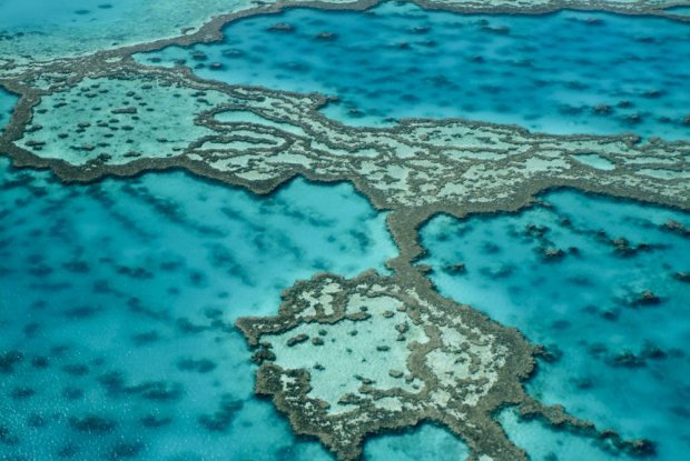 Rafa koralowa/ Fot. Shutterstock