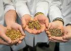 Produkują tony larw dziennie, robią z nich paszę. Firma z Robakowa rusza na podbój świata