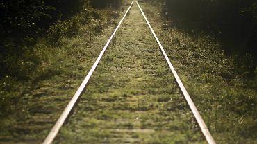 PKP. Wśród pięciu rozważanych wariantów kolejowej obwodnicy Białegostoku, dwa - zdaniem ekologów - doprowadzą do nieodwracalnej degradacji Puszczy Knyszyńskiej