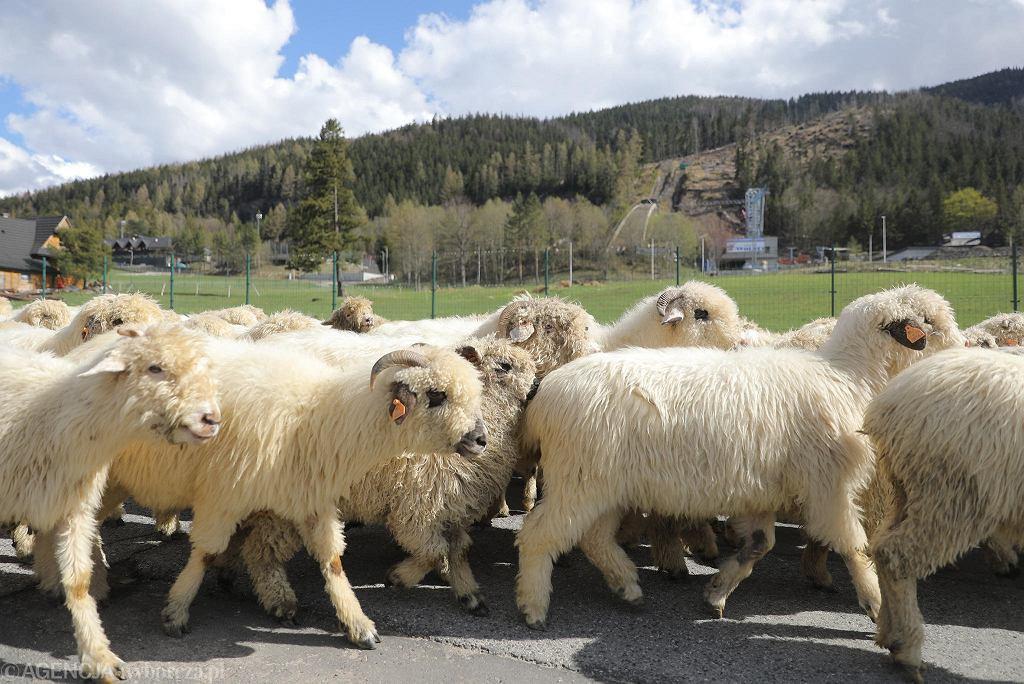 TPN dopiero od poniedziaku 4 maja otwiera wszystkie szlaki turystyczne. Do tego czasu dostpne s tylko cztery dolinki w rejonie Zakopanego: Biaego, Stryska, Za Bramk i Ku Dziurze. Z tego powodu w czasie majwki w Zakopanem nie ma tumw. Owszem, na Krupwkach spotka mona turystw, podobnie w czterech otwartych dolinkach. Na Gubawce jednak pustki.