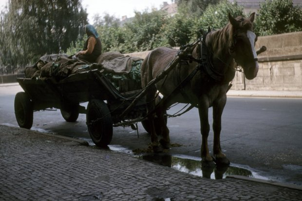 """""""Ten zaprzężony w konia wóz dostarczał warzywa na warszawski uniwersytet"""" - opisuje dr Schultz"""