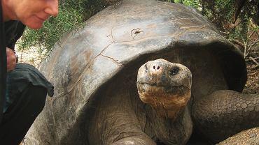 Marta Tutaj i żółw na Galapagos