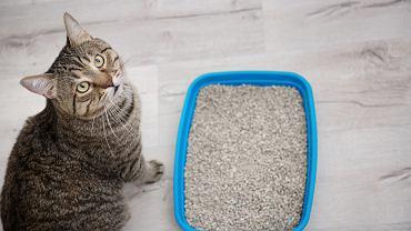 Żwirek dla kota musi być odpowiednio dobrany. Zdjęcie ilustracyjne