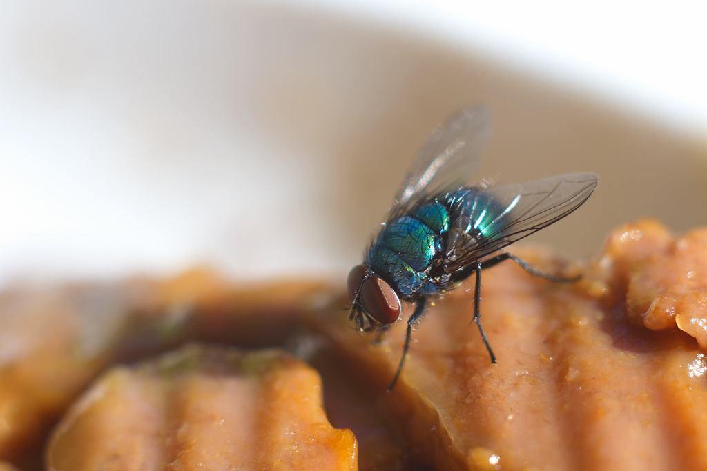 Gdy na jedzeniu usiądzie mucha, zwykle zganiamy ją i jemy dalej bez namysłu.